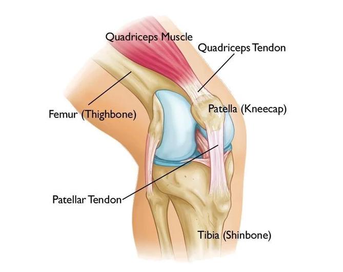 Anterior Knee Pain Diagram